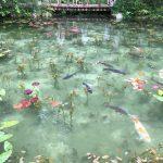 岐阜県モネの池の行き方 地元民がおすすめのランチもご紹介。紅葉シーズンもあじさいのシーズンもとてもキレイです!