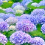 2018年の 梅雨入り、梅雨明け予想【福岡、九州地方】
