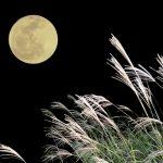 中秋節とは何?日本で例えるとお月見? 子供にも分かりやすく由来を解説