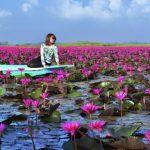 世界ふしぎ発見のフォトジェニック対決の睡蓮の湖がピンクで綺麗!写真や正式名称 紅い睡蓮の海(タレー・ブア・デーン/正式名:ノーンハーン)
