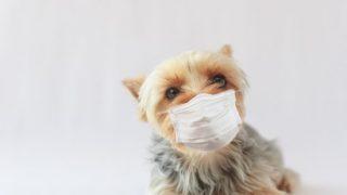 マスクをかけている時に、あごや鼻、口の周りが【ムズムズかゆい】場合の解決方法4選